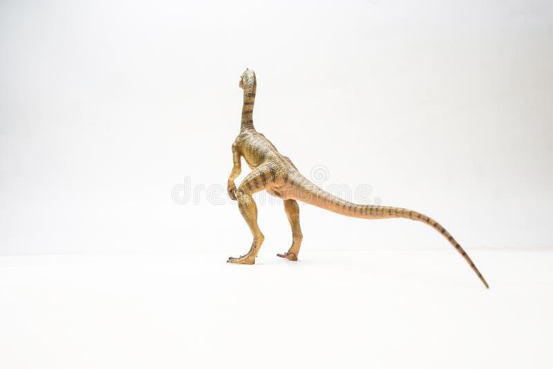 Δεινόσαυρος Compsognathus στο άσπρο υπόβαθρο στοκ εικόνα με δικαίωμα ελεύθερης χρήσης