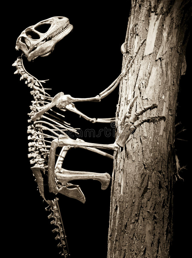 Δεινόσαυρος - Deinonychus στοκ εικόνα