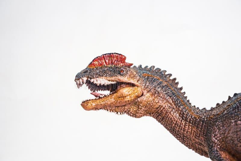 Δεινόσαυρος, Dilophosaurus στο άσπρο υπόβαθρο στοκ εικόνα