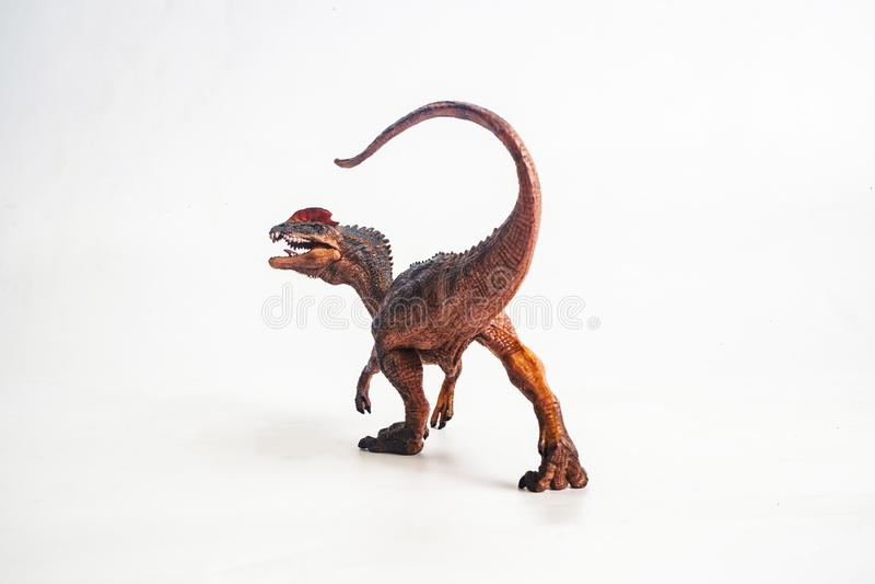 Δεινόσαυρος, Dilophosaurus στο άσπρο υπόβαθρο στοκ εικόνα με δικαίωμα ελεύθερης χρήσης