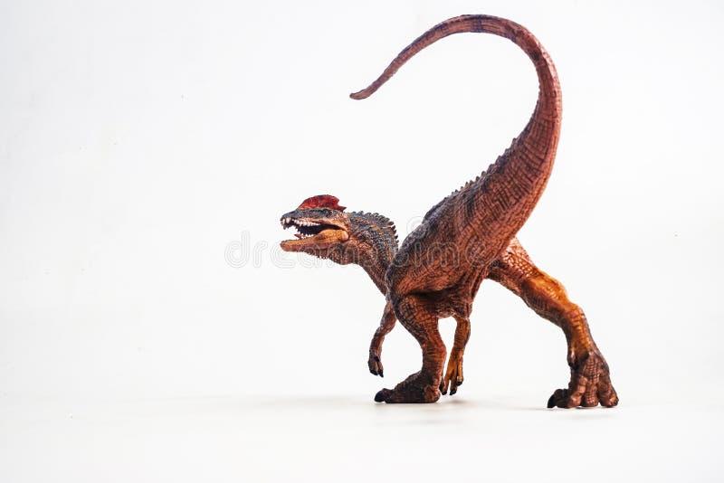 Δεινόσαυρος, Dilophosaurus στο άσπρο υπόβαθρο στοκ φωτογραφίες