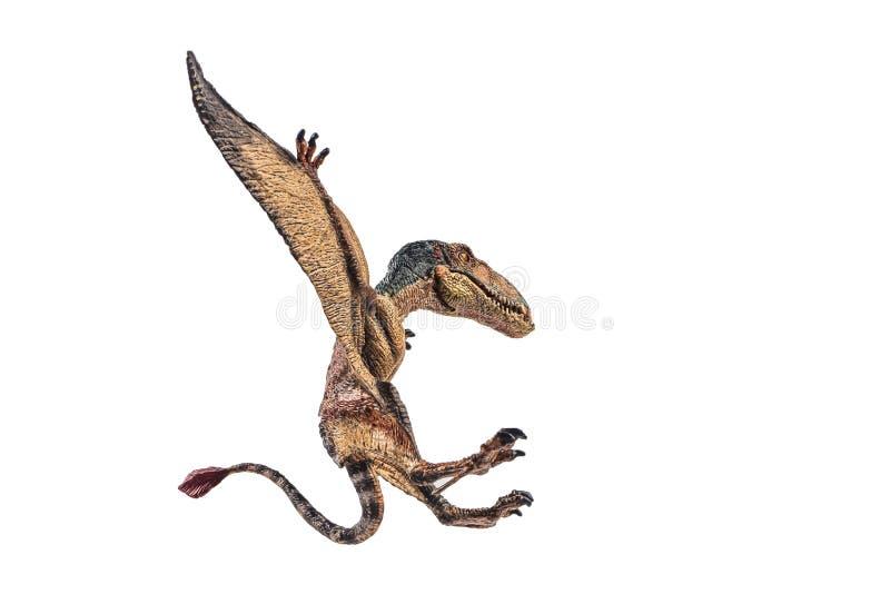 Δεινόσαυρος Dimorphodon στο άσπρο υπόβαθρο στοκ εικόνα με δικαίωμα ελεύθερης χρήσης