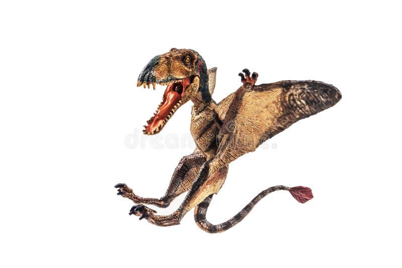 Δεινόσαυρος Dimorphodon στο άσπρο υπόβαθρο στοκ εικόνα