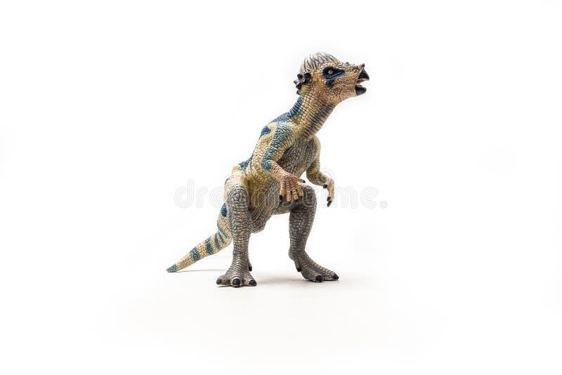 Δεινόσαυρος Pachycephalosaurus στο άσπρο υπόβαθρο στοκ φωτογραφίες με δικαίωμα ελεύθερης χρήσης