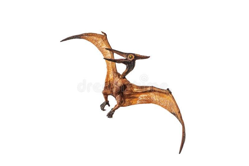 Δεινόσαυρος Pterodactyl Pteranodon στο άσπρο υπόβαθρο στοκ εικόνα