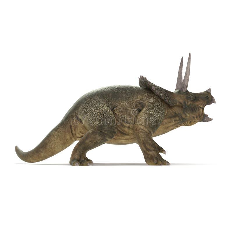 Δεινόσαυρος Triceratops στο λευκό τρισδιάστατη απεικόνιση διανυσματική απεικόνιση