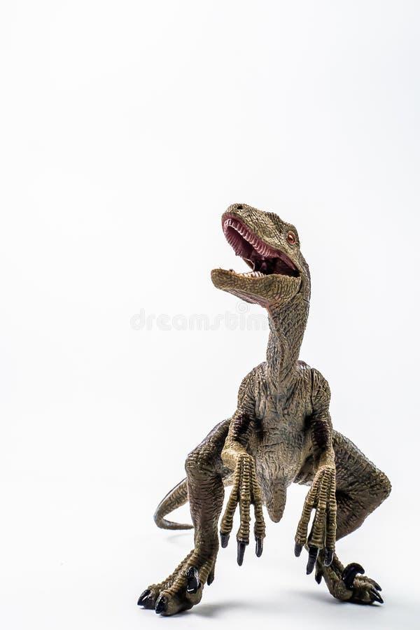 Δεινόσαυρος, Velociraptor στο άσπρο υπόβαθρο στοκ εικόνες