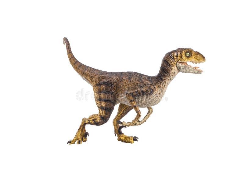 Δεινόσαυρος Velociraptor στο άσπρο υπόβαθρο στοκ εικόνες με δικαίωμα ελεύθερης χρήσης