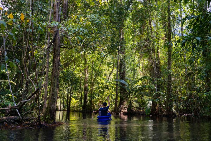 22 Δεκεμβρίου 2018 - Ταϊλάνδη:: δάσος μαγγροβίων ταξιδιού από το rowboat στοκ εικόνες