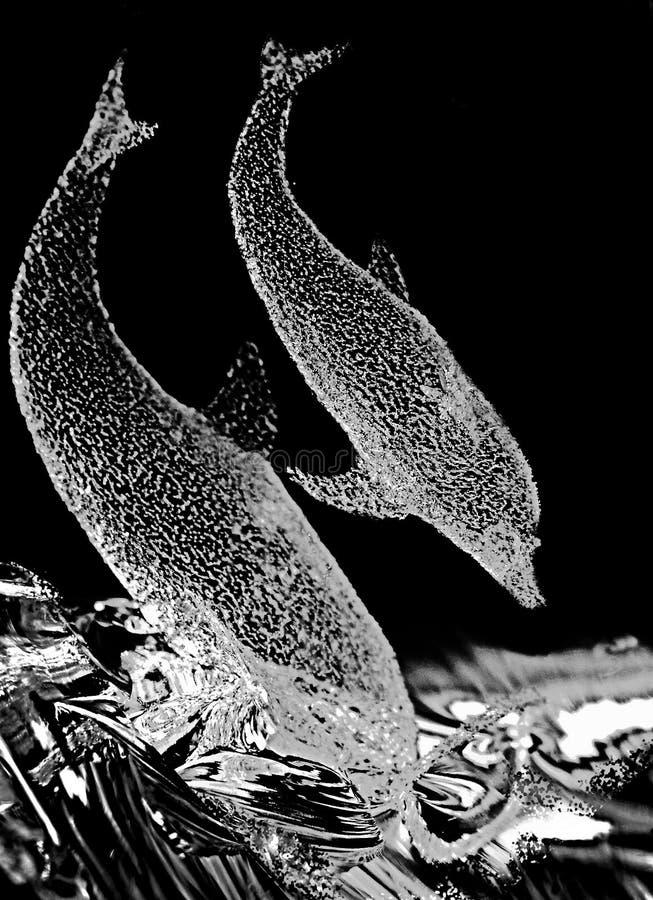 δελφίνια κρυστάλλου στοκ εικόνες με δικαίωμα ελεύθερης χρήσης