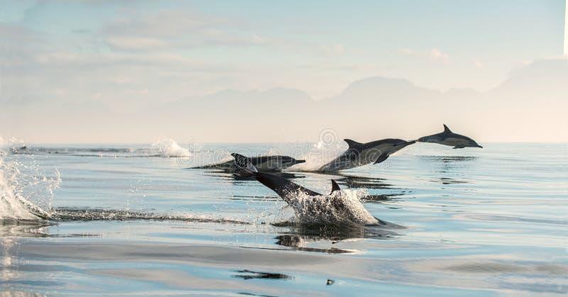 Δελφίνια στον ωκεανό στοκ φωτογραφία με δικαίωμα ελεύθερης χρήσης
