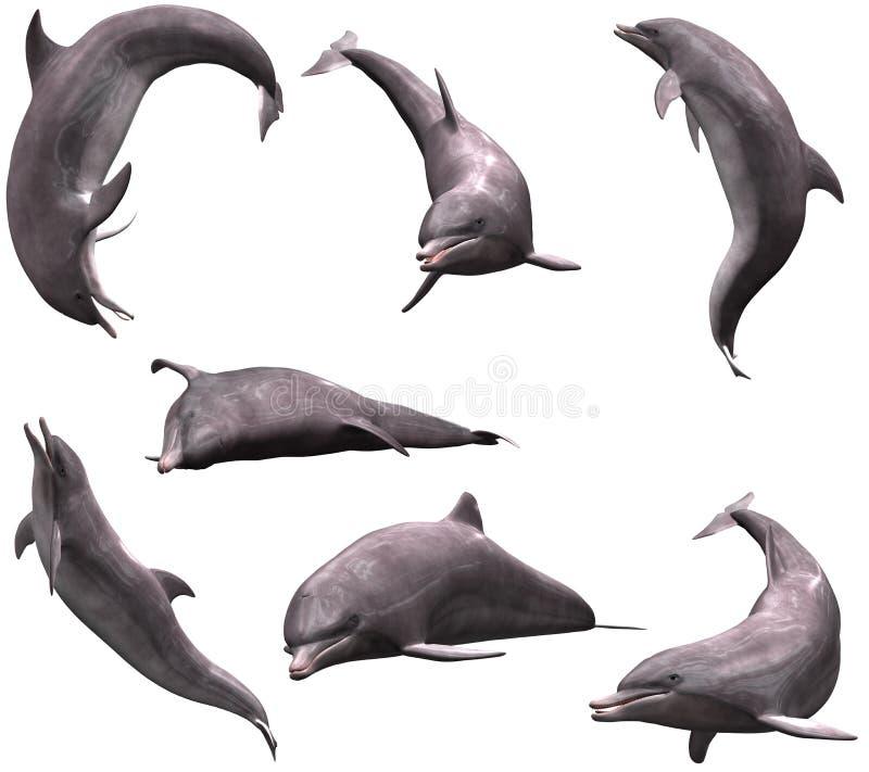 δελφίνια διανυσματική απεικόνιση