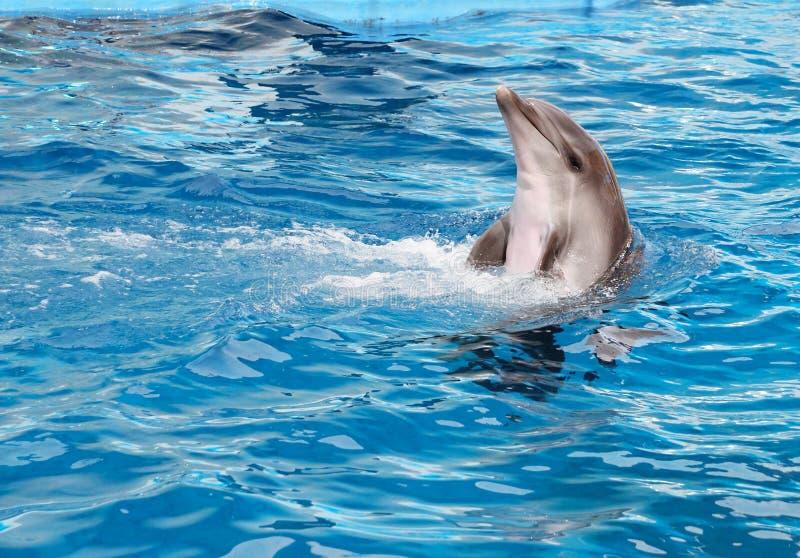 δελφίνι μπουκαλιών που μυρίζεται στοκ εικόνα με δικαίωμα ελεύθερης χρήσης