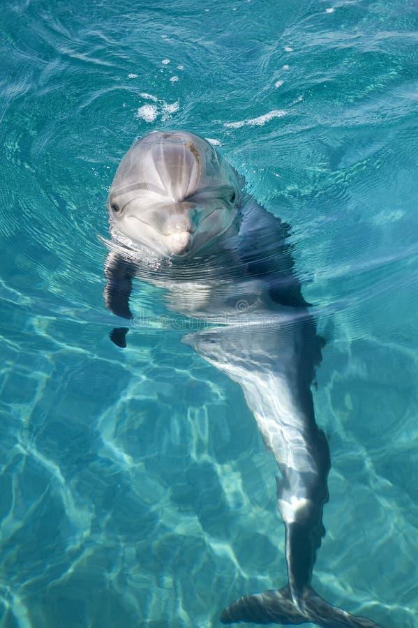 δελφίνι μπουκαλιών που μ&u στοκ εικόνες με δικαίωμα ελεύθερης χρήσης