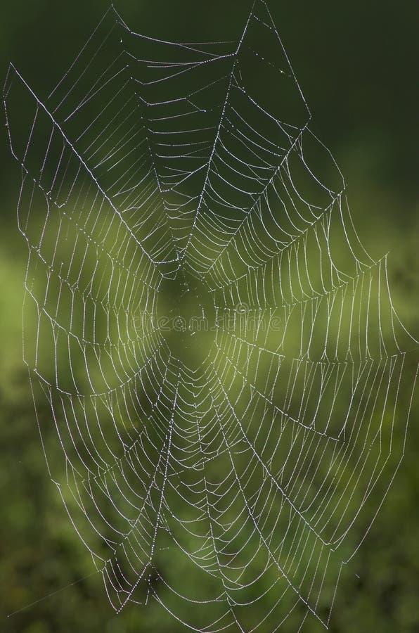 δεμένος δροσιά Ιστός στοκ φωτογραφία με δικαίωμα ελεύθερης χρήσης