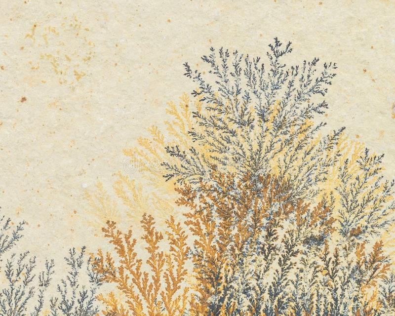 Δενδρίτες σιδήρου και μαγγάνιου στοκ εικόνες
