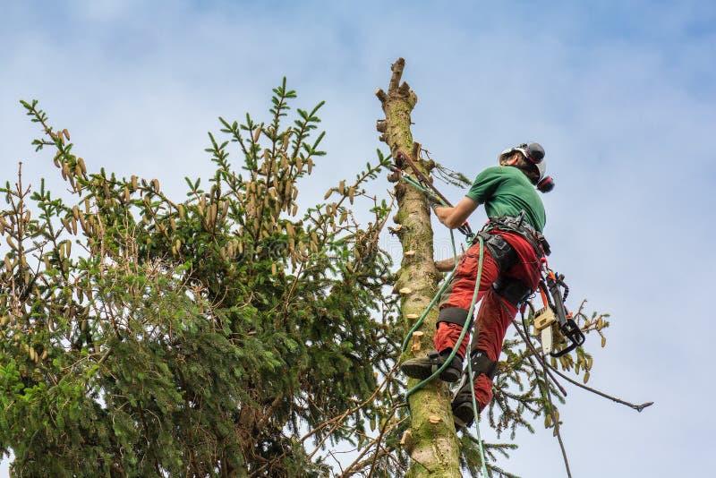 Δενδροκόμος που αναρριχείται στην κορυφή δέντρων με το σχοινί στοκ φωτογραφίες