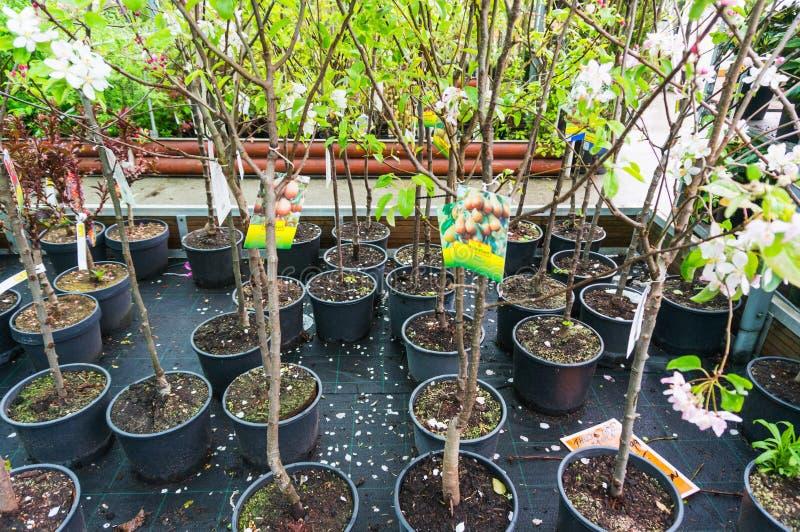 Δενδρύλλια δέντρων για την πώληση στοκ φωτογραφία