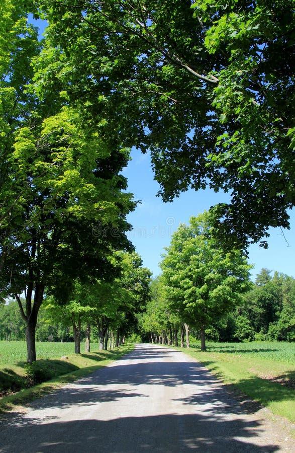 Δενδρώδης οδός με τα φύλλα που διαμορφώνουν μια καρδιά πέρα από το δρόμο στοκ εικόνες