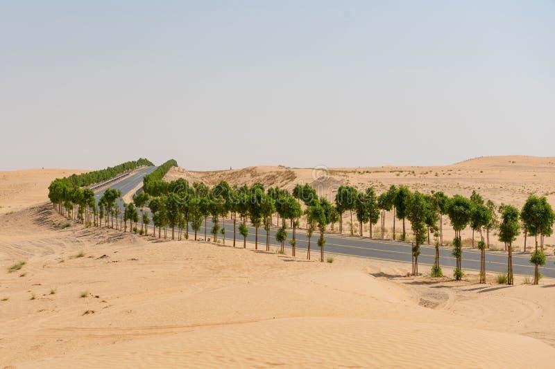 Δενδρώδης δρόμος μέσω του τοπίου ερήμων στοκ φωτογραφία με δικαίωμα ελεύθερης χρήσης