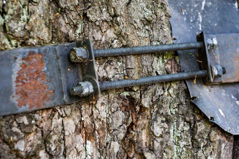 Δεσμός μετάλλων με τα μπουλόνια σε έναν κορμό δέντρων στοκ εικόνα με δικαίωμα ελεύθερης χρήσης