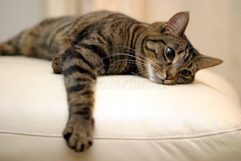 Download δεσποινίδα εσείς στοκ εικόνα. εικόνα από γατάκι, χαριτωμένος - 120979