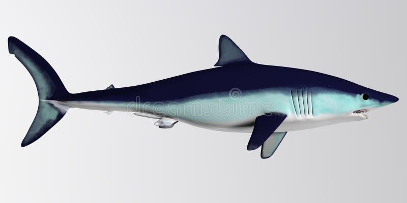 Δευτερεύον σχεδιάγραμμα καρχαριών της Mako στοκ φωτογραφία με δικαίωμα ελεύθερης χρήσης