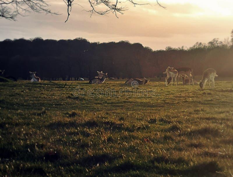 Δευτερεύον τοπίο χώρας με τα deers στοκ εικόνες