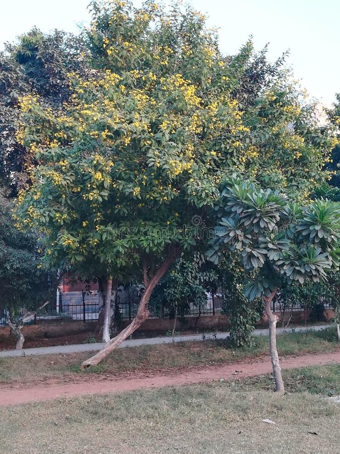 Δευτερεύουσες εγκαταστάσεις κήπων στοκ φωτογραφία με δικαίωμα ελεύθερης χρήσης