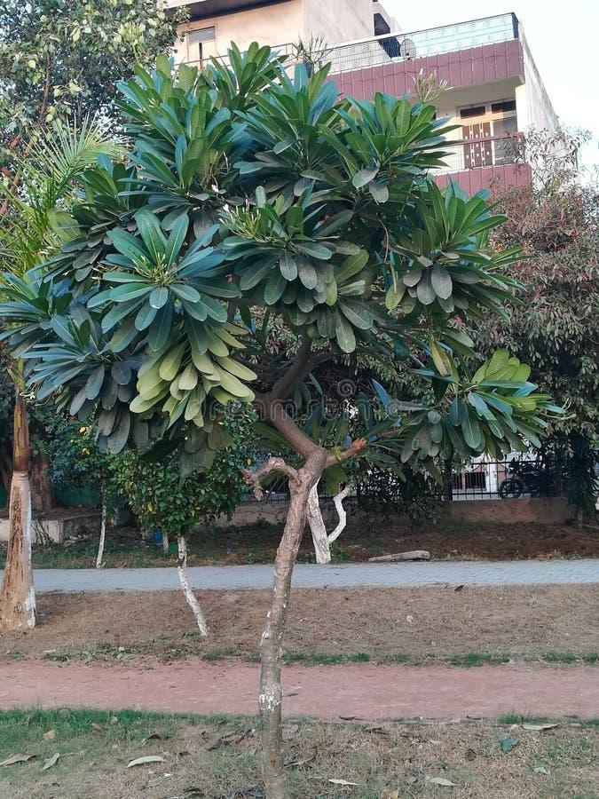 Δευτερεύουσες εγκαταστάσεις κήπων στοκ φωτογραφίες με δικαίωμα ελεύθερης χρήσης