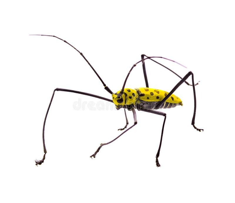 Δηλητήριο εντόμων που απομονώνει στο άσπρο υπόβαθρο στοκ εικόνες