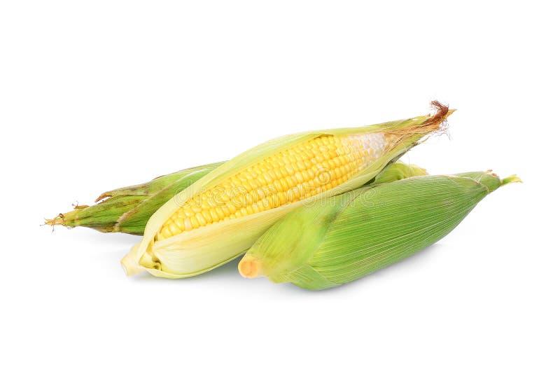 Δημητριακά αυτιών που απομονώνονται στο λευκό στοκ φωτογραφία με δικαίωμα ελεύθερης χρήσης