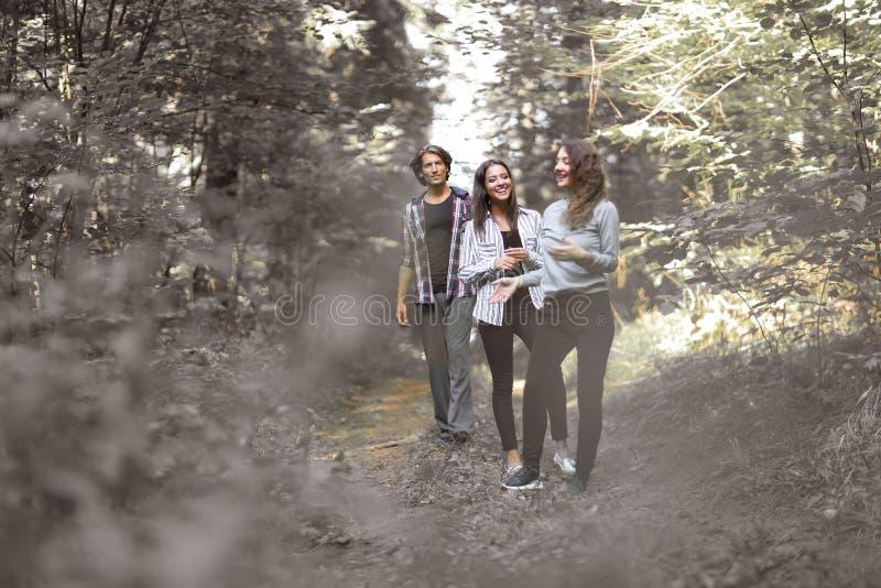 Δημιουργική ομάδα, πεζοπορία στα ξύλα στοκ εικόνα με δικαίωμα ελεύθερης χρήσης