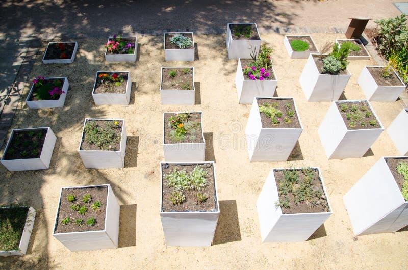 Δημιουργικός βοτανικός κήπος σχεδίου με το άσπρο τετραγωνικό δοχείο λουλουδιών στοκ φωτογραφίες
