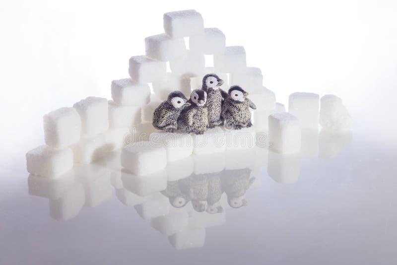 Δημιουργικός πυροβολισμός των κύβων ζάχαρης και penguins στοκ εικόνες