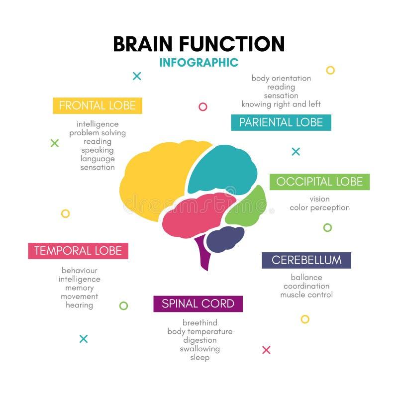 Δημιουργικό ανθρώπινο μυαλό λοβών έννοιας εγκεφάλου infographic διανυσματική απεικόνιση