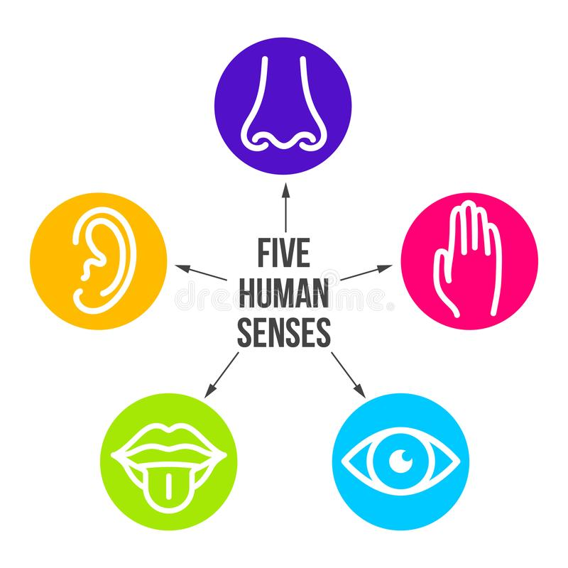 Δημιουργικό διανυσματικό σύνολο εικονιδίων γραμμών απεικόνισης πέντε ανθρώπινων αισθήσεων Όραμα, ακρόαση, μυρωδιά, αφή, γούστο πο απεικόνιση αποθεμάτων