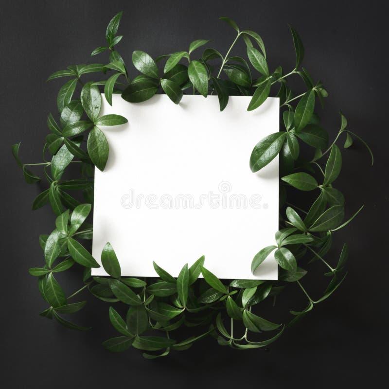 Δημιουργικό σχεδιάγραμμα φιαγμένο από πράσινα φύλλα με το κενό κενό για τη σημείωση για το μαύρο υπόβαθρο Τοπ όψη στοκ φωτογραφία με δικαίωμα ελεύθερης χρήσης