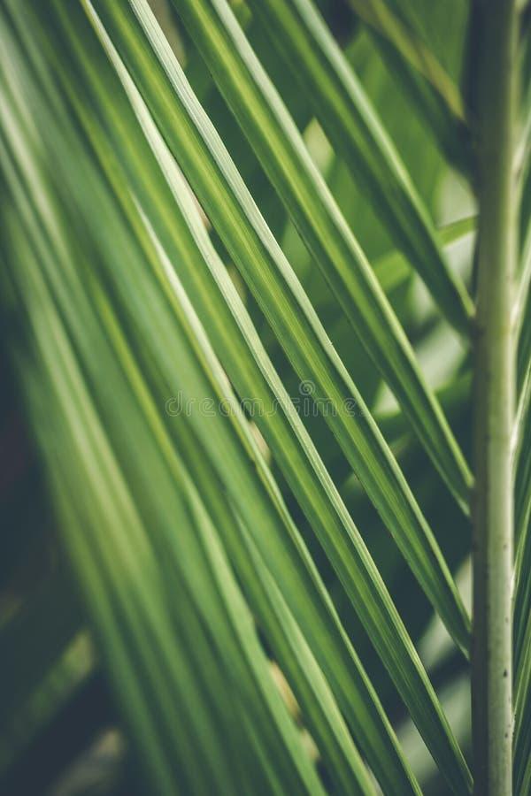Δημιουργικό τροπικό πράσινο σχεδιάγραμμα φύλλων φοίνικας ανασκόπησης τρο στοκ φωτογραφίες με δικαίωμα ελεύθερης χρήσης