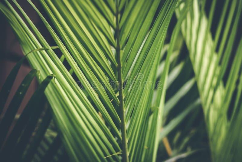 Δημιουργικό τροπικό πράσινο σχεδιάγραμμα φύλλων φοίνικας ανασκόπησης τρο στοκ φωτογραφίες