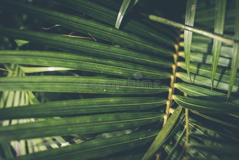 Δημιουργικό τροπικό πράσινο σχεδιάγραμμα φύλλων φοίνικας ανασκόπησης τρο στοκ εικόνα με δικαίωμα ελεύθερης χρήσης