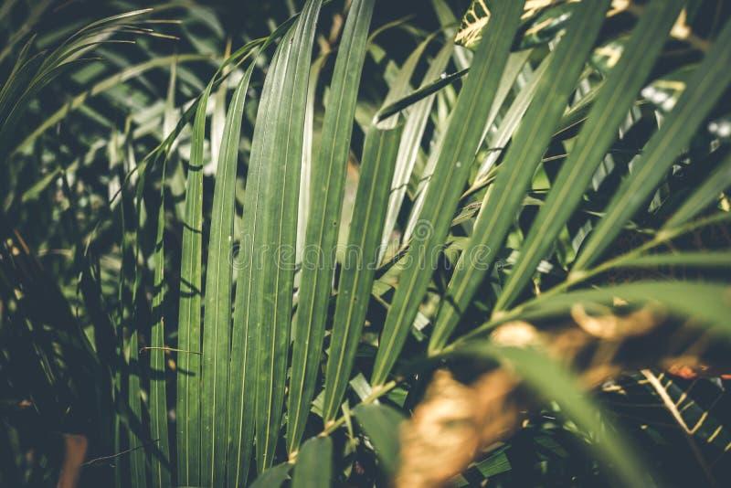Δημιουργικό τροπικό πράσινο σχεδιάγραμμα φύλλων φοίνικας ανασκόπησης τρο στοκ φωτογραφία