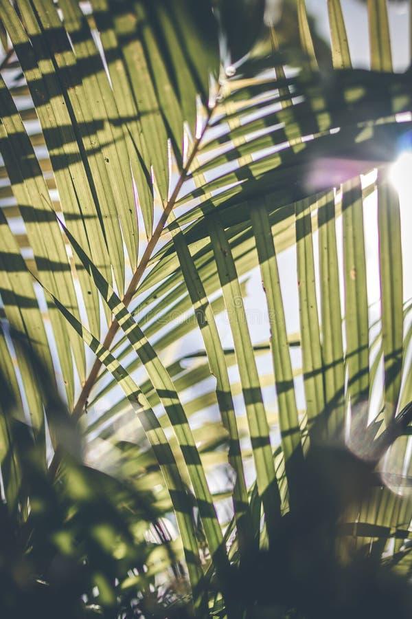 Δημιουργικό τροπικό πράσινο σχεδιάγραμμα φύλλων φοίνικας ανασκόπησης τρο στοκ εικόνες