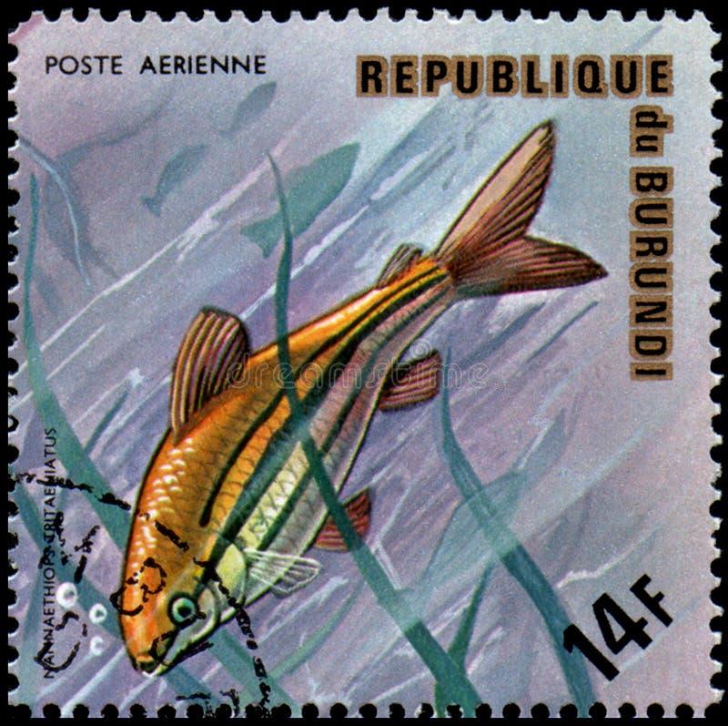 ΔΗΜΟΚΡΑΤΙΑ ΤΟΥ ΜΠΟΥΡΟΥΝΤΊ - CIRCA 1974: το γραμματόσημο, που τυπώνεται στο Μπουρούντι, παρουσιάζει σε ένα ψάρι τρεις-ευθυγραμμισμ στοκ φωτογραφία με δικαίωμα ελεύθερης χρήσης