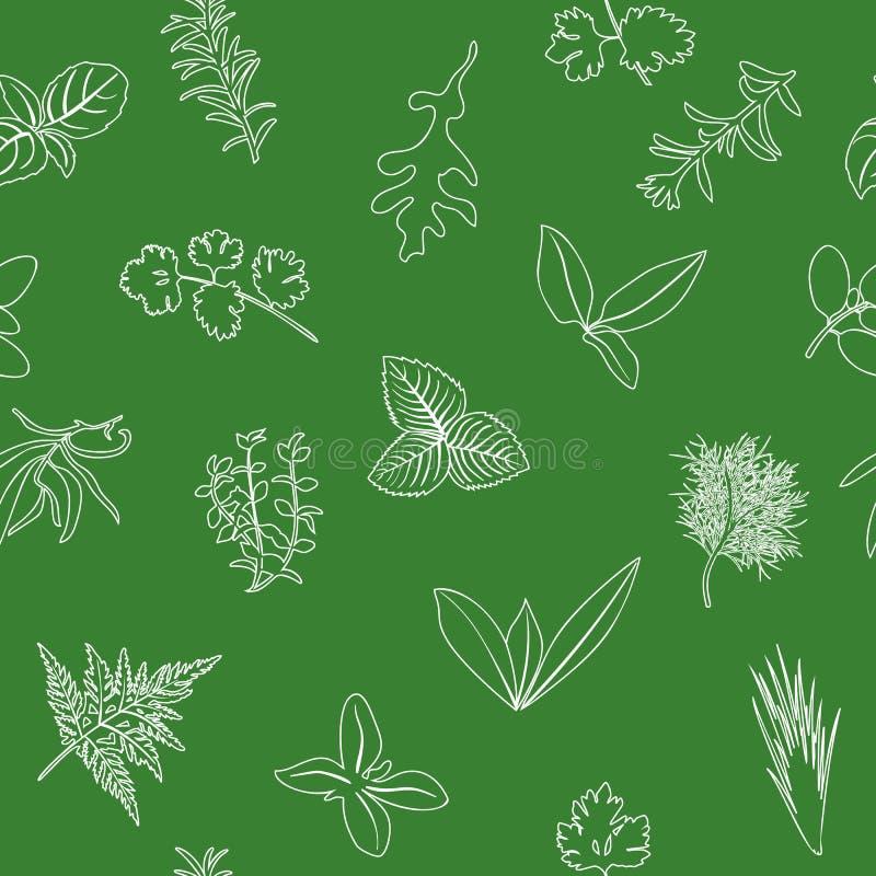 Δημοφιλές μαγειρικό άνευ ραφής σχέδιο χορταριών Ρεαλιστικό ύφος σκίτσο περιλήψεων εικονιδίων σε πράσινο Βασιλικός, κορίανδρο, μέν διανυσματική απεικόνιση
