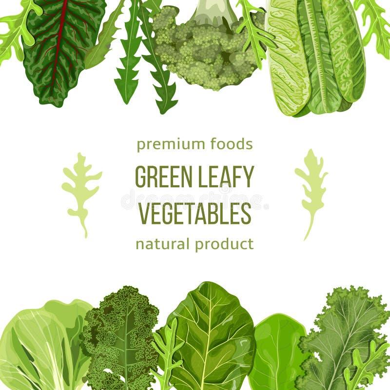 Δημοφιλές πρότυπο καρτών πράσινων φυλλωδών λαχανικών Φυτικά κορυφή και κατώτατο σημείο πλαισίων κείμενο, διάστημα αντιγράφων Σπαν ελεύθερη απεικόνιση δικαιώματος