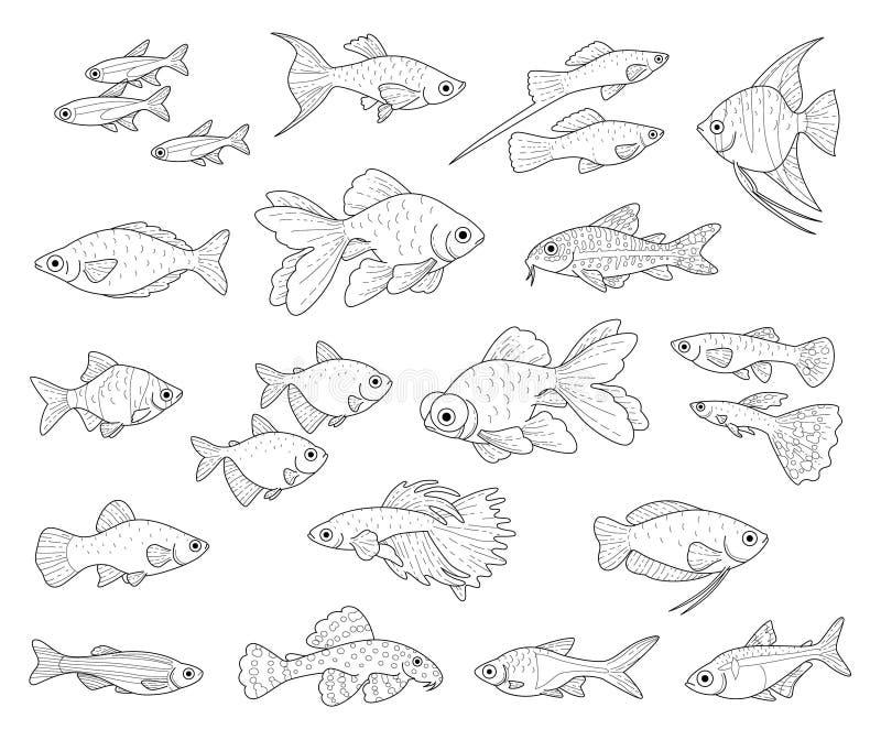 Δημοφιλή ψάρια ενυδρείων ελεύθερη απεικόνιση δικαιώματος