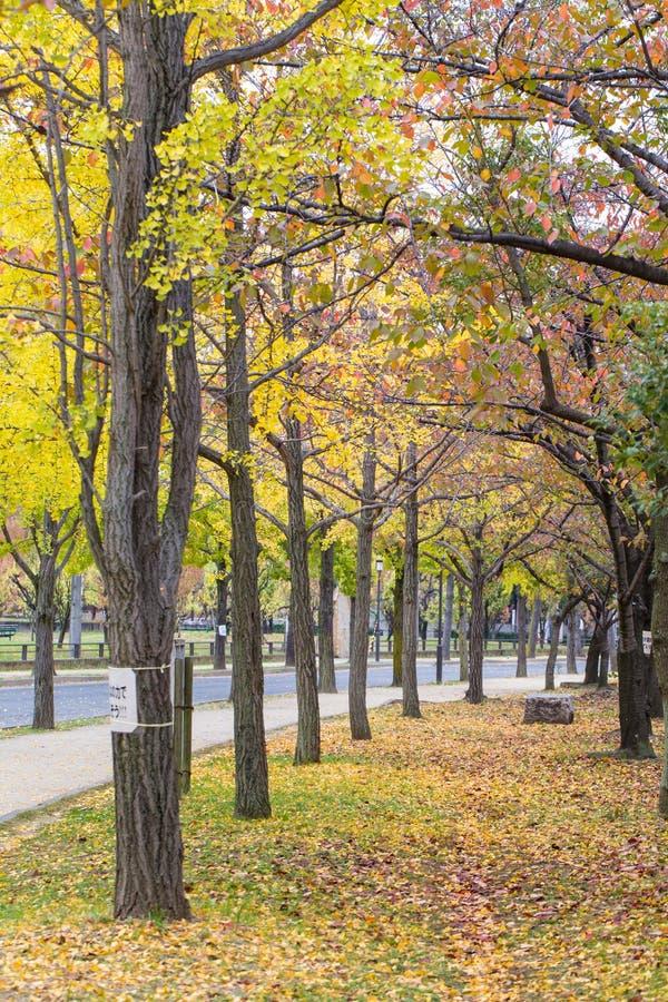 Δημόσιο πάρκο φθινοπώρου στοκ φωτογραφίες