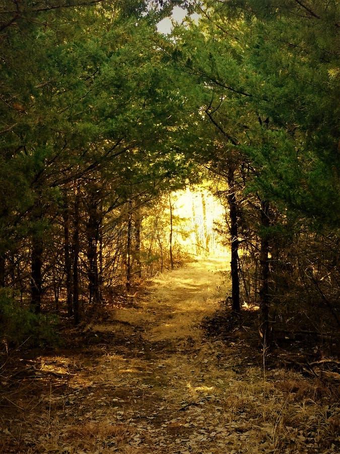 Διάβαση δέντρων στοκ φωτογραφία με δικαίωμα ελεύθερης χρήσης