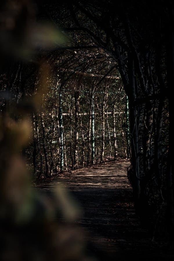 Διάβαση μυστηρίου στον κήπο Ίντεν στοκ εικόνες